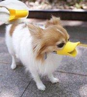 Kutya Csőr szájkosár S