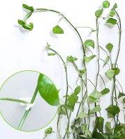 Mászó növény rögzítő öntapadós csat